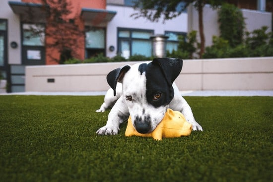make diy toys for your pet so you can save money on pets