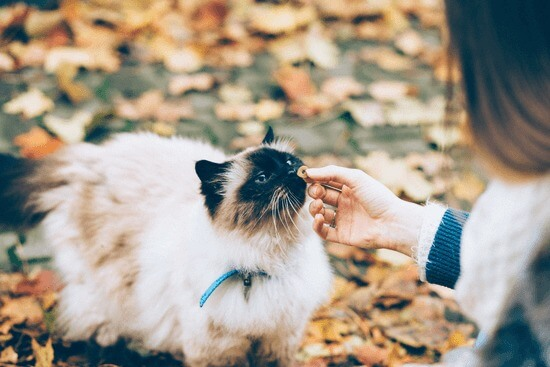 make diy treat to save money on your pet