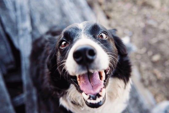 take care of your pet's teeth to avoid expensive medical problems